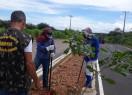 Prefeitura de Pimenteiras realiza plantio de mudas de árvores