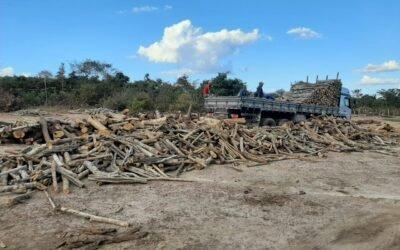 Polícia resgata adolescentes em condições análogas a escrivadão e apreende grande quantidade de madeira em Elesbão Veloso